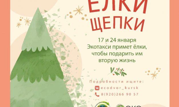 Волонтеры заберут у курян новогодние елки